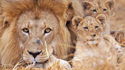 Nature on CBBC - Amazing animal dads