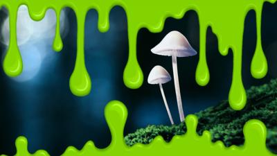 Autumnwatch on CBBC - Quiz: Freaky fungi