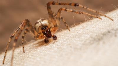 Close up of a house spider on a carpet