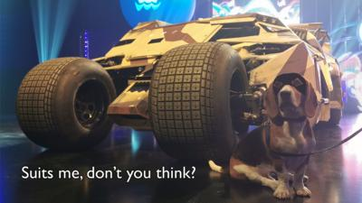 Henry the Blue Peter dog sat by the Batmobile Tumbler.