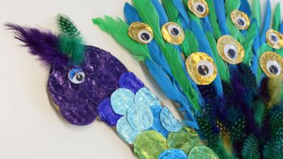 Blue Peter - Post of the Week: Peter the peacock