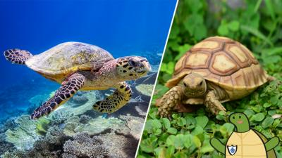 Blue Peter - Terrific turtle quiz