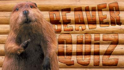 Winterwatch on CBBC - Quiz: How much do you know about beavers?