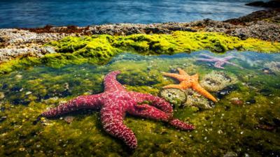 Nature on CBBC - Blue Planet II 'Coasts'