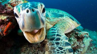 Nature on CBBC - Quiz: Blue Planet II 'Coral Reefs'