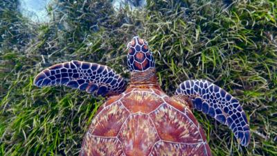 Nature on CBBC - Blue Planet II 'Green Seas'