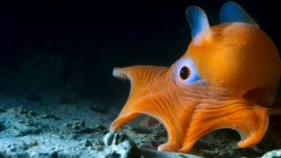 Nature on CBBC - Quiz: Blue Planet II 'The Deep'