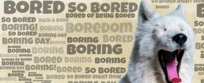 CBBC HQ Boredom Buster. A Dog yawning with beige wallpaper and text saying 'Bored' all around it.
