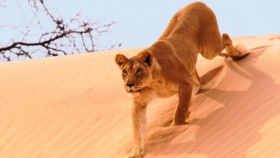 Nature on CBBC - Quiz: Planet Earth II 'Deserts'