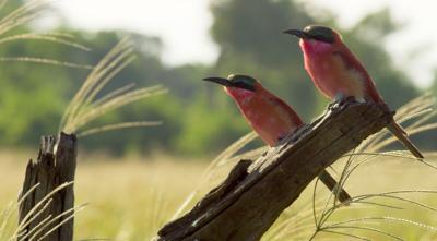 Nature on CBBC - Quiz: Planet Earth II 'Grasslands'