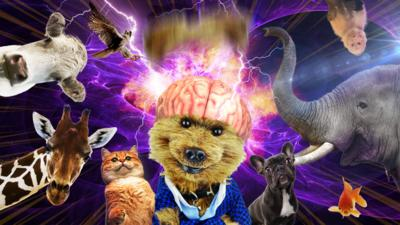 Hacker's Magic Mind with animals surrounding Hacker. All the animals looked shocked as his mind explodes.