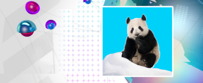Image of panda in snow, with Newsround branding behind it.