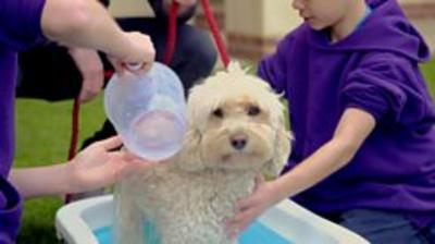 Our School - Our School: Summer Camp Dog Grooming