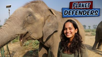Planet Defenders - These fantastic elephants are at risk