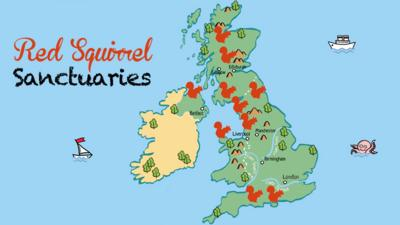 A map of the UK, showing red squirrel distribution using red squirrel icons across Scotland, northern England and the south coast, including Anglesey and Norther Ireland.