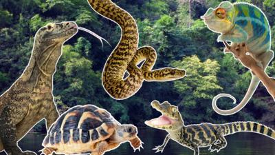 Nature on CBBC - Quiz: Reptiles true or false?