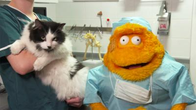 Saturday Mash-Up! - Stanley goes to work at the vets