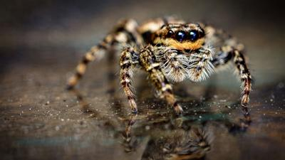 Springwatch on CBBC - Which UK spider are you?
