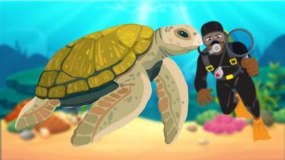 CBBC - Race the Clock: Spot the Turtle