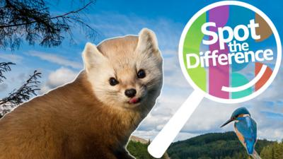 Springwatch on CBBC - Spot the Difference: Springwatch