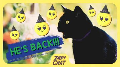 Black cat with text: 'He's back!'.