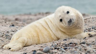 Winterwatch on CBBC - 5 of winter's toughest animals