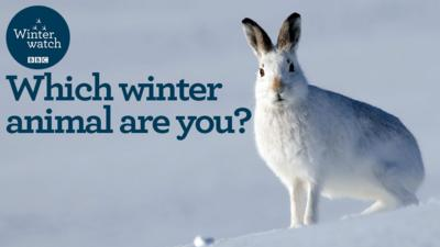 Winterwatch on CBBC - Which winter animal are you?
