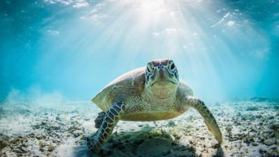 Nature on CBBC - Quiz: How much do you know about turtles?
