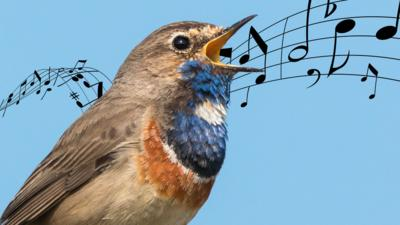 Animaltastic - Animals singing opera