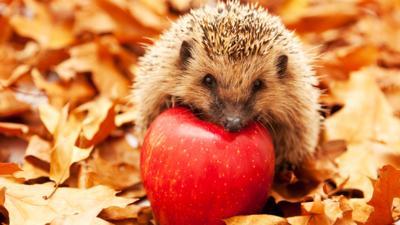 Autumnwatch on CBBC - Quiz: Autumn Animals
