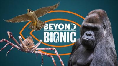 Beyond Bionic - Beyond Bionic: Mega Quiz 2