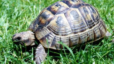 Shelley the Tortoise