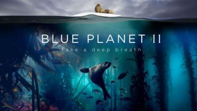 Nature on CBBC - Quiz: Blue Planet II 'One Ocean'