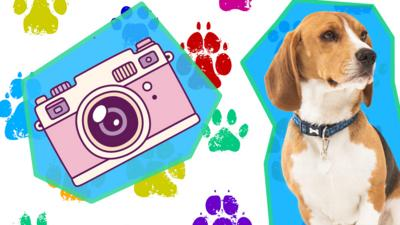 Blue Peter - Henry's anniversary - show us your pets!
