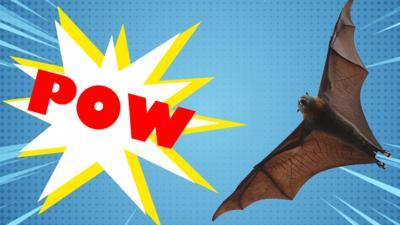 Blue Peter - Which Batman character are you?