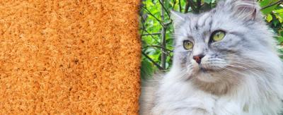 A cat and a mat.