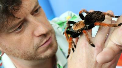 Blue Peter - Meet Charlotte the Redknee Tarantula