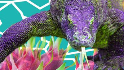Blue Peter - Quiz: Dragons are awesome!