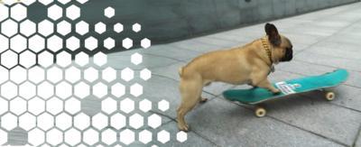 Eroc the dog, on his skateboard.