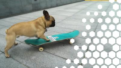 Blue Peter - Eroc the skateboarding dog