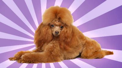 Blue Peter - Ask an expert dog groomer your question