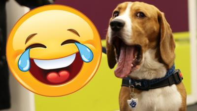Blue Peter - Funny Henry the dog bloopers