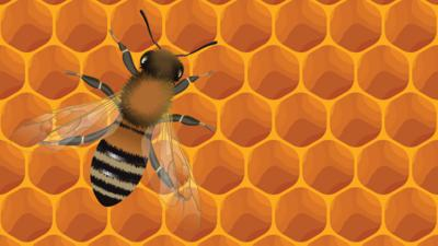 Blue Peter - Quiz: Can you HoneyBEE the best?