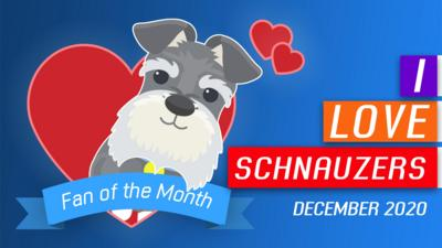 Fan of the month: I love schnauzers