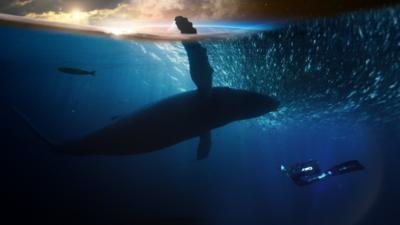 Nature on CBBC - The Big Blue Planet Live Quiz