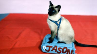 Jason the Cat