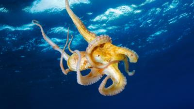 Blue Peter - Quiz: Which deep sea creature are you?