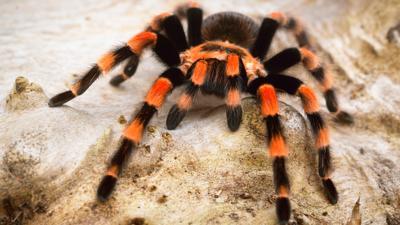 Blue Peter - Take on Scott's spider quiz
