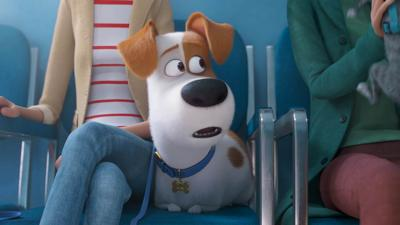 Blue Peter - We need your secret life of pets portraits