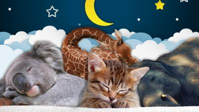 Blue Peter - Super cute creature sleeping quiz